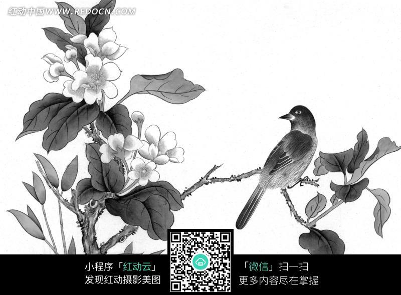 工笔画之站在树枝上的喜鹊图片