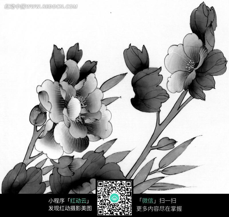 工笔画之盛开的花朵