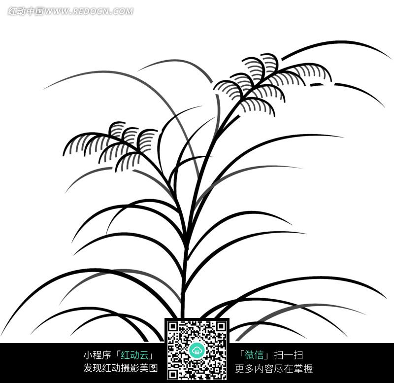 手绘插画 植物素材 细长植物叶子  花纹 花纹素材 花边 花边素材