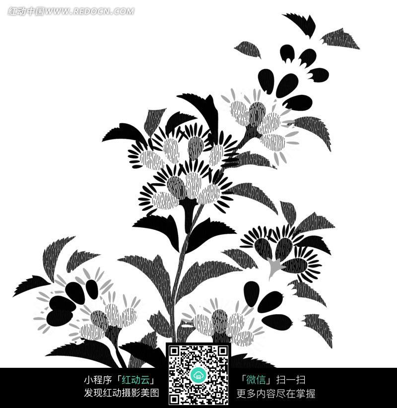 手绘美丽的黑白植物花朵花卉插画图片免费下载 红动网