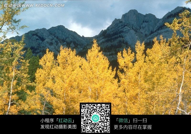 免费素材 图片素材 自然风光 自然风景 金秋时节的山林美景图片  请您