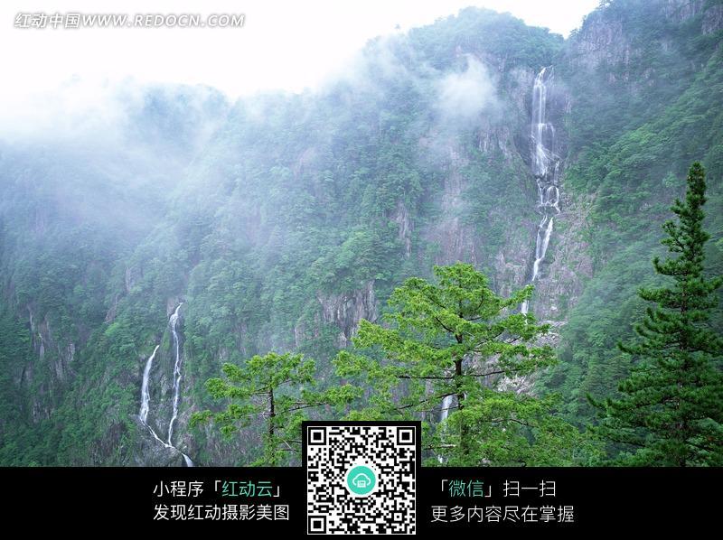 雾气笼罩下的高山和树木图片