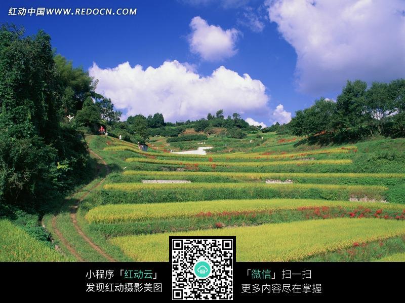 蓝天白云下美丽的田野图片_自然风景图片