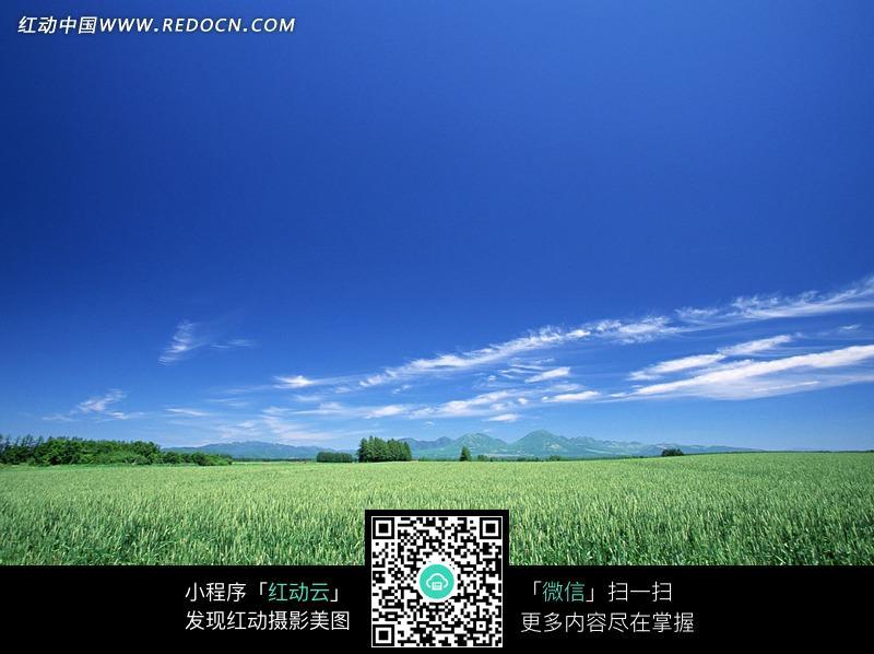 翠绿的田野和树木图片_天空云彩图片
