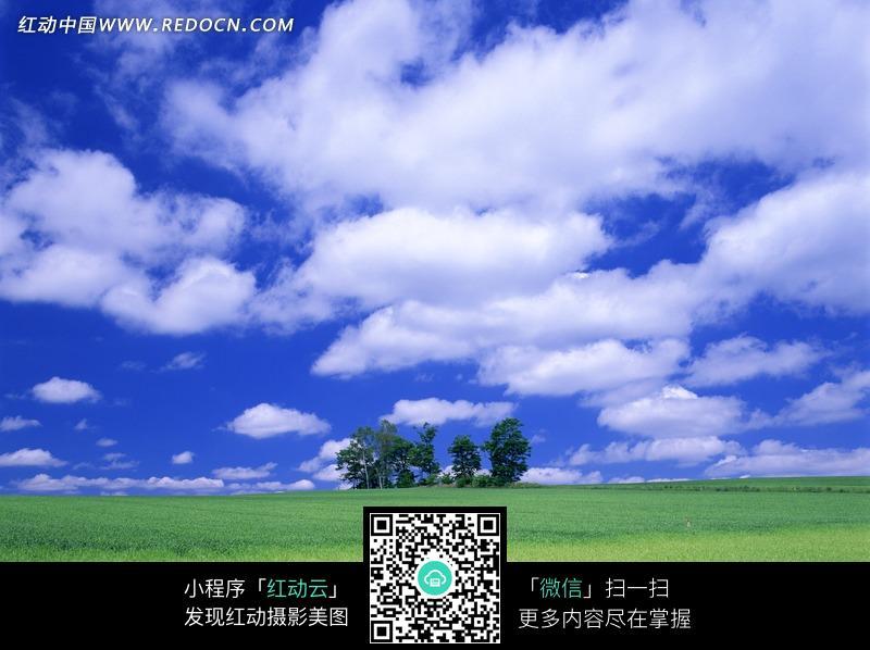 蓝天下绿油油的水稻田图片