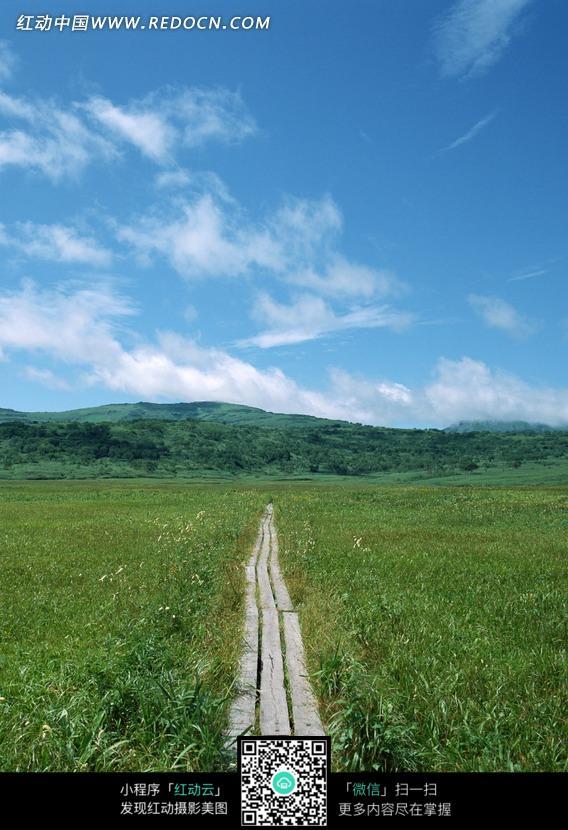 草地上狭窄的石板路图片