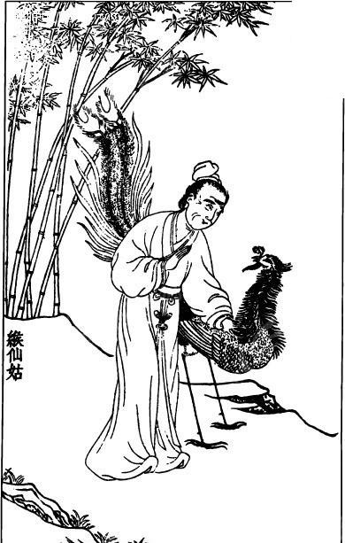 竹子 插画 手绘