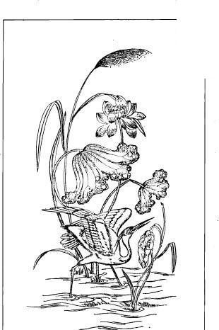 中国古典图案-荷花荷叶和白鹭构成的图案