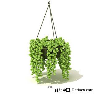 一盆吊兰3dmax模型免费下载