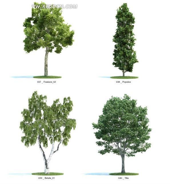 形状各异的立体树木_动物植物
