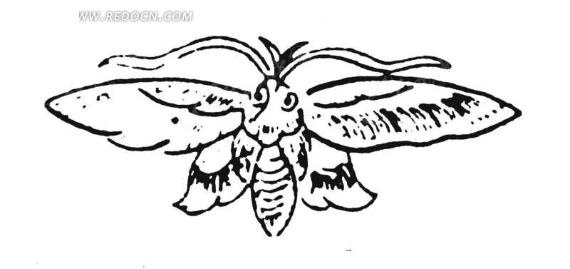 展开翅膀的小蜜蜂正面黑白手绘矢量图