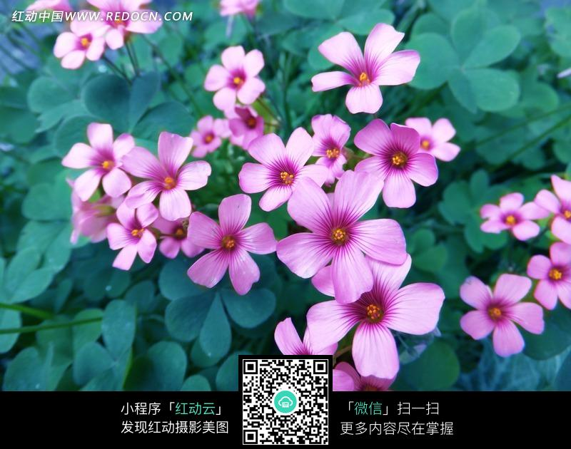 最美花草樹木圖片_漂亮的花朵微信頭像