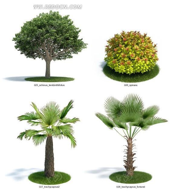 四种室外植物与花卉3dmax模型 高清图片