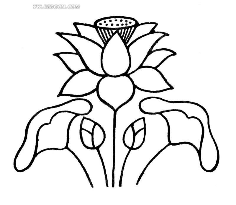 古典莲花图片手绘