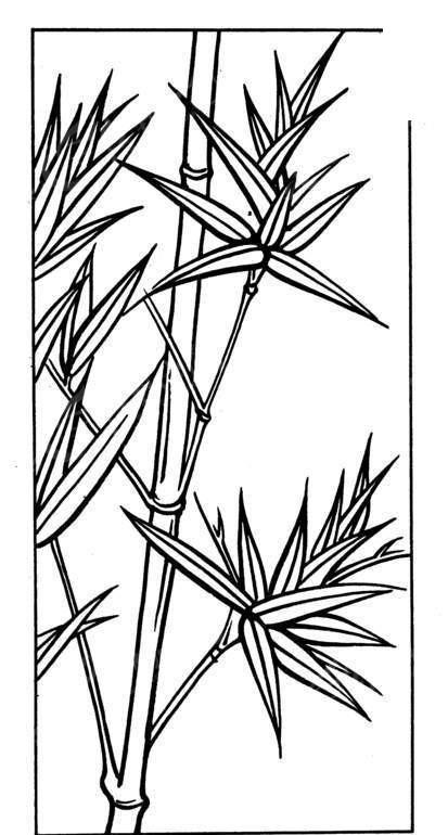 竹子白描图