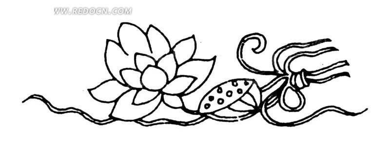 手绘莲实莲花
