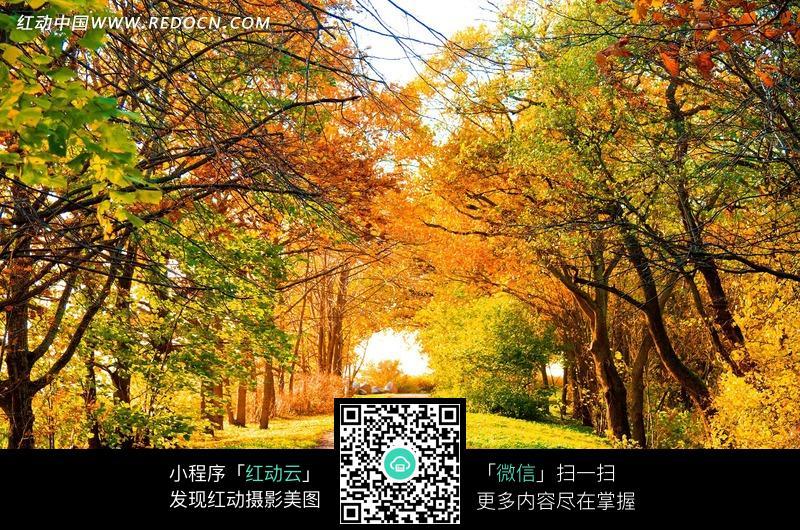 秋日小路旁的树林风景图片