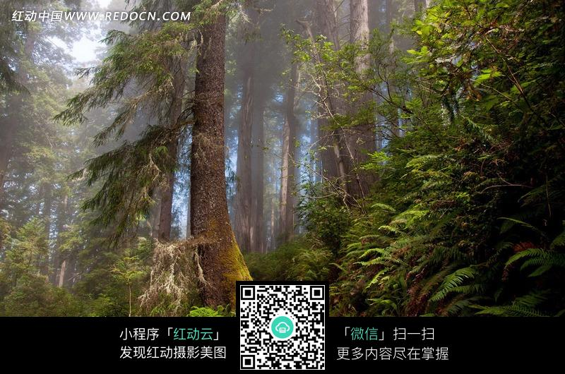 唯美森林风景图片_自然风景图片
