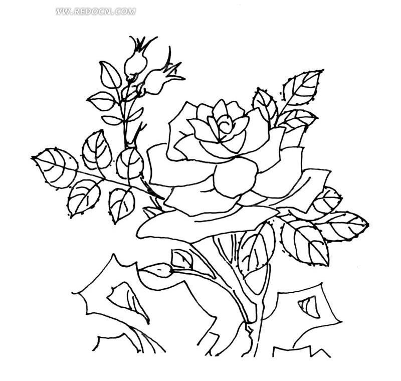 石头边盛开的玫瑰线描图