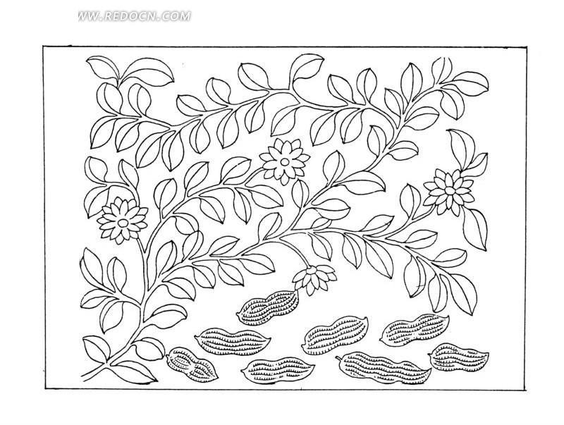 方形里的植物和花生线描图