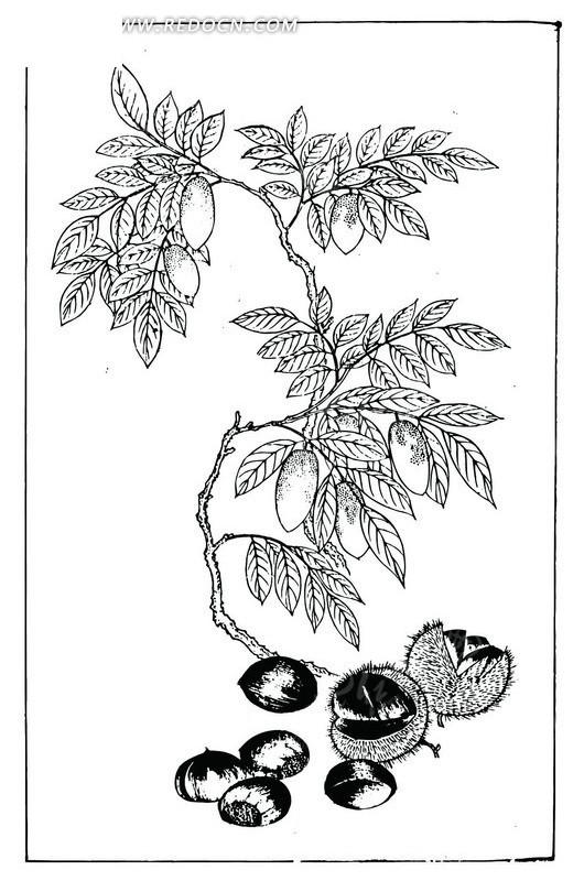 手绘树枝图片简笔画