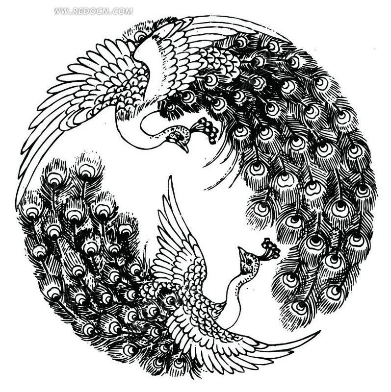 手绘孔雀黑白装饰