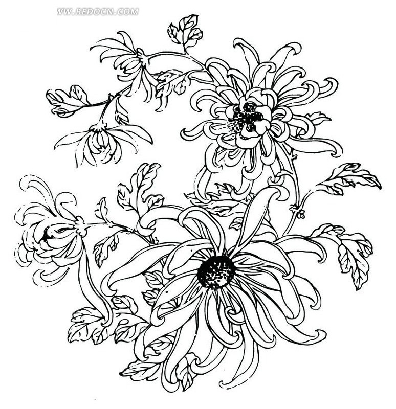 洒落的梅花花瓣展示