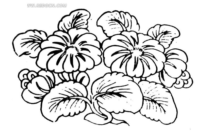 鲜花盛开的植物线描图