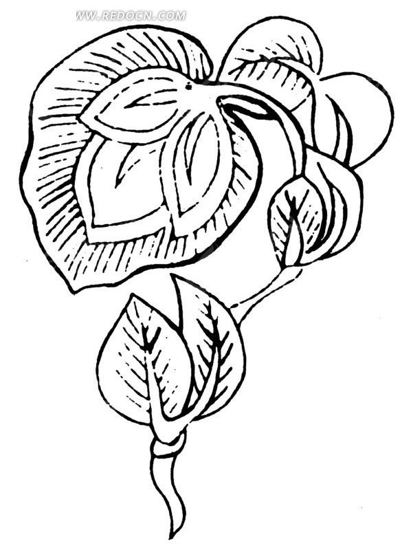 弯曲枝条上的叶子线描图