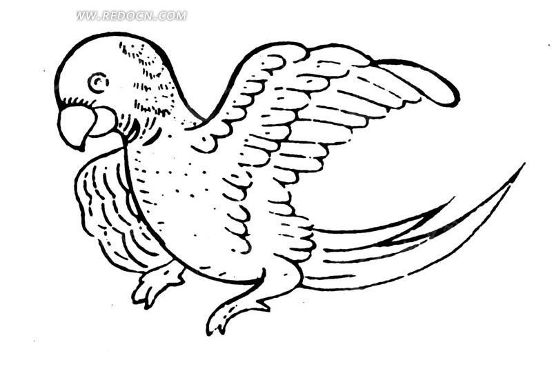 画鹦鹉的简笔画步骤