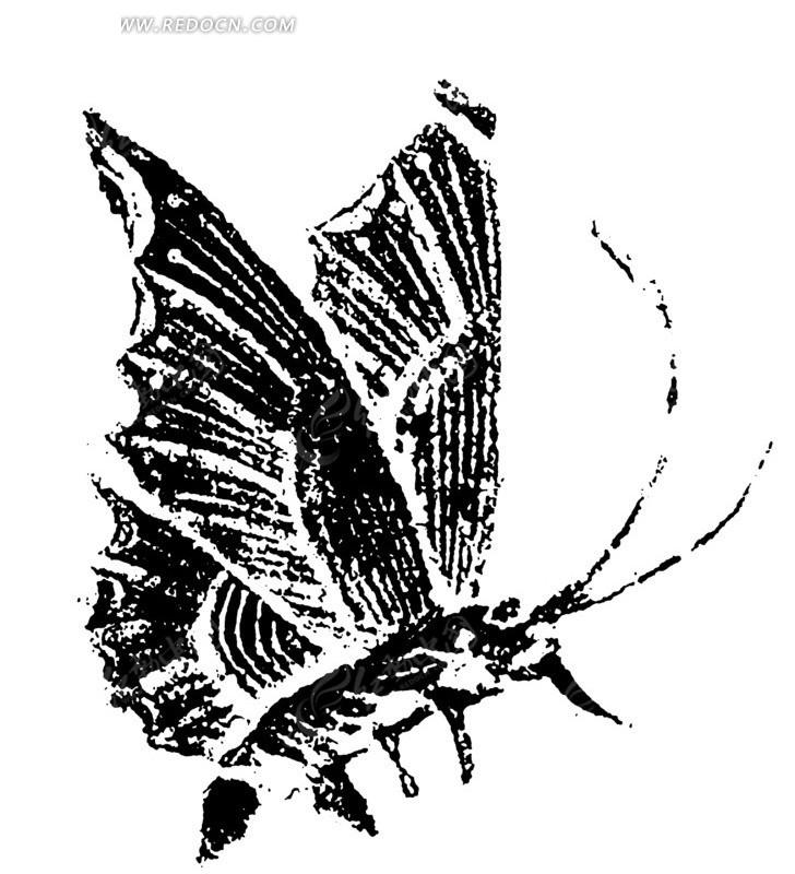 一只蝴蝶黑白图