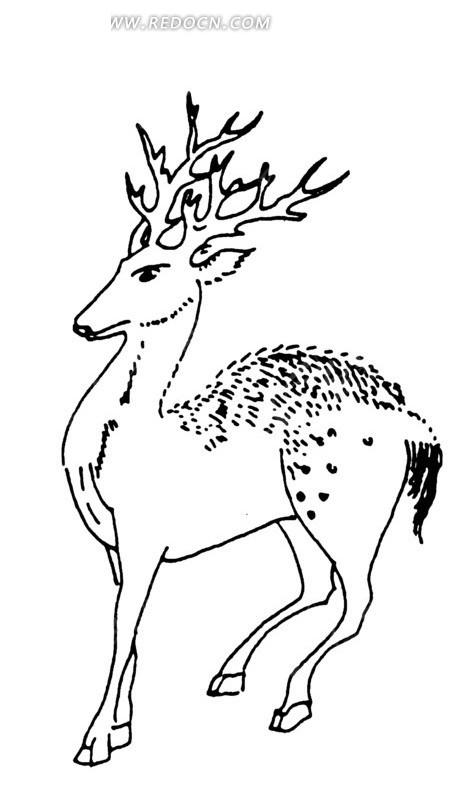 手绘斑点角鹿