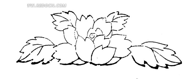 叶子和盛开的花朵线描图