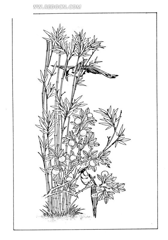 竹子鸟马克笔手绘