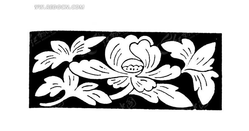 黑色背景上开花的植物线描图