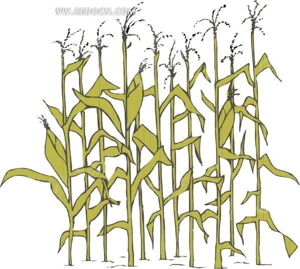手绘玉米秸