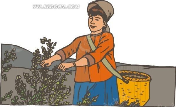 免费素材 矢量素材 矢量人物 职业人物 采茶叶的妇女