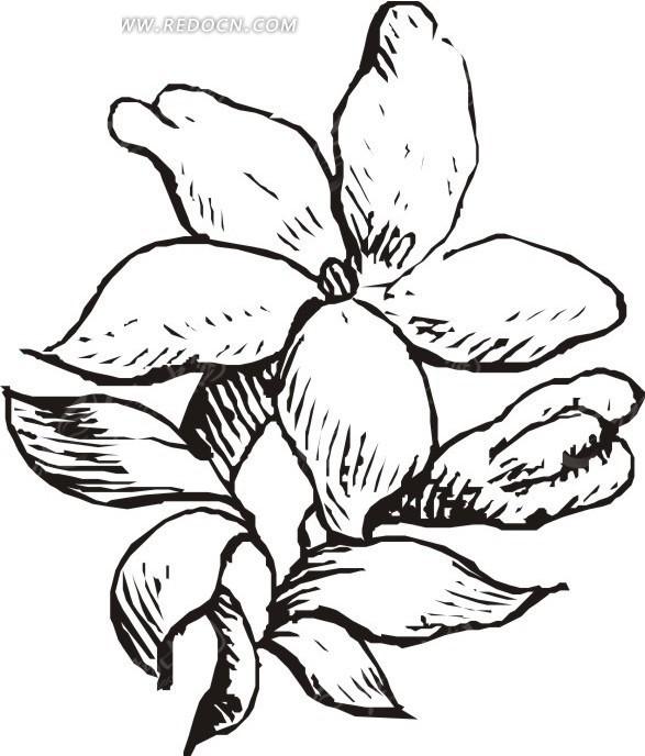 手绘花茎上盛开的花朵