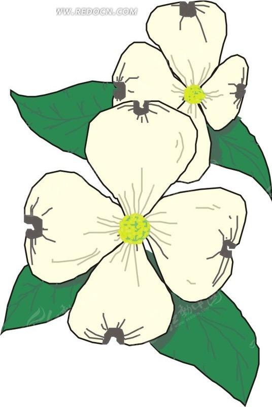 手绘白色花瓣的花朵