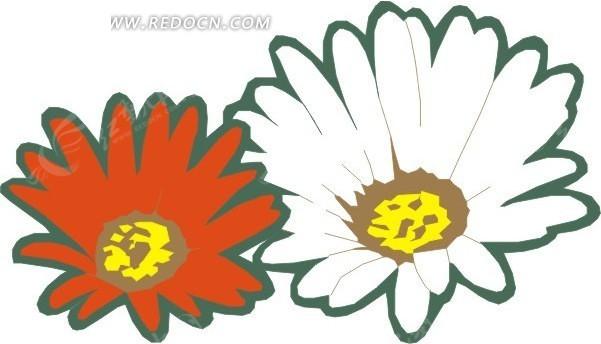 手绘红色和白色非洲菊