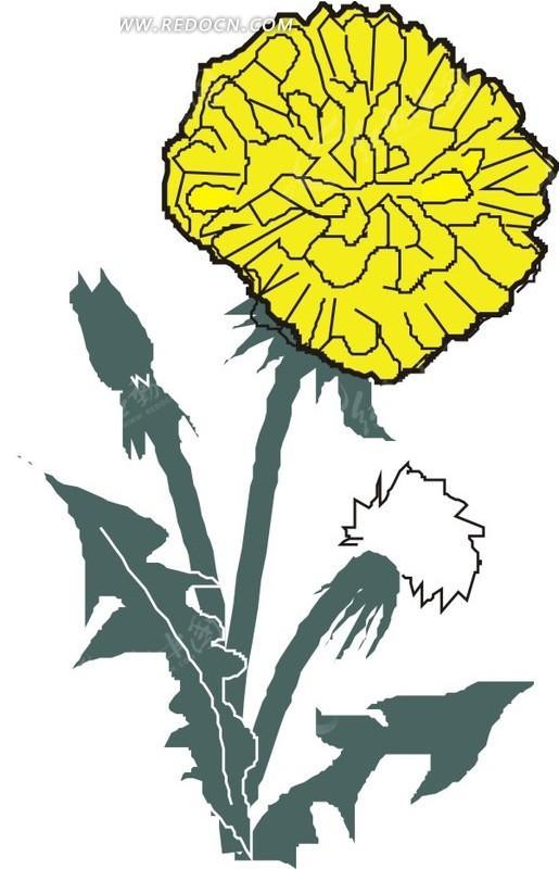 手绘白色背景上的蒲公英花朵