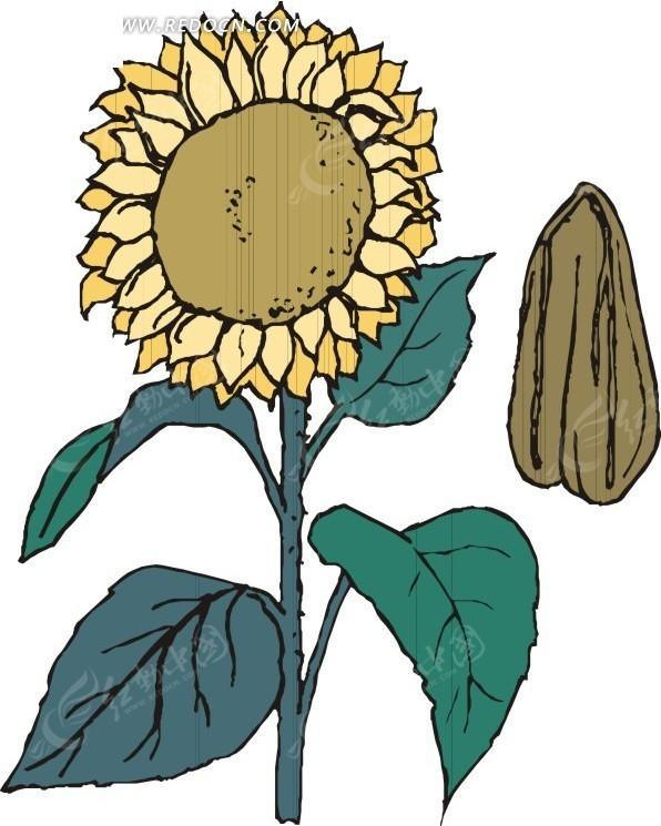 手绘 向日葵 植物 植物图片