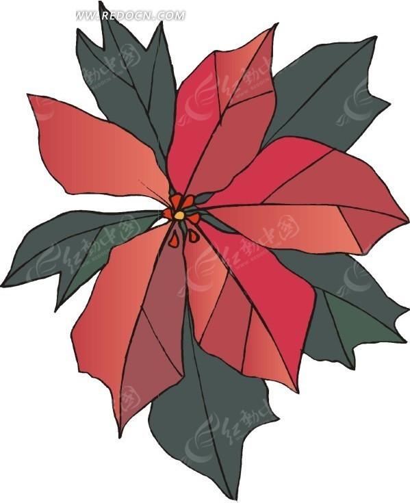 手绘墨绿色叶子和红色叶子的一品红