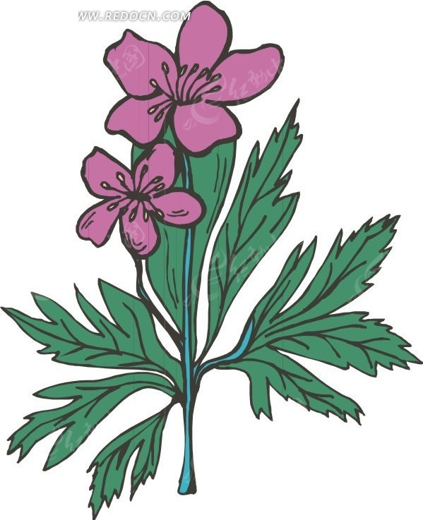 紫红色手绘花朵和绿叶