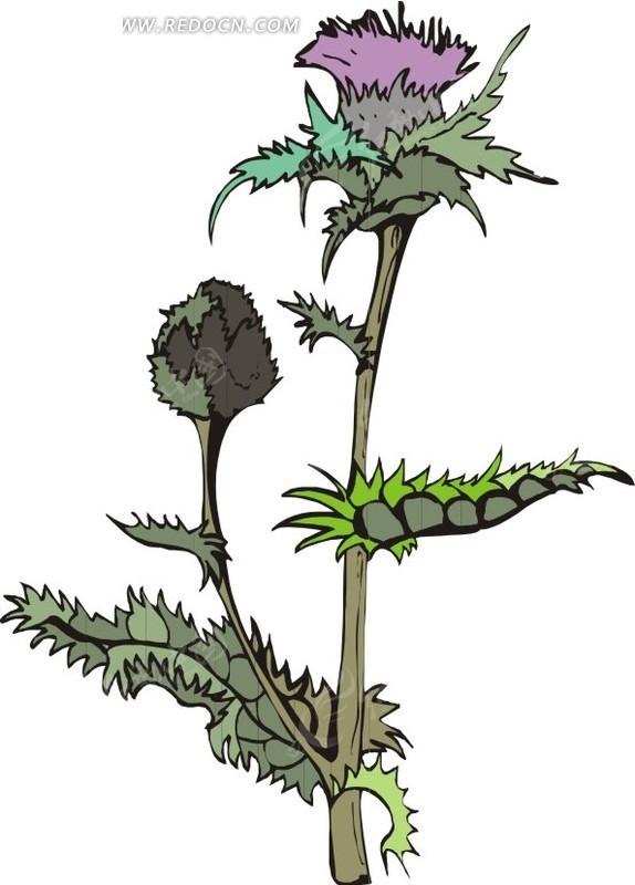 锯齿状叶子的手绘植物图片