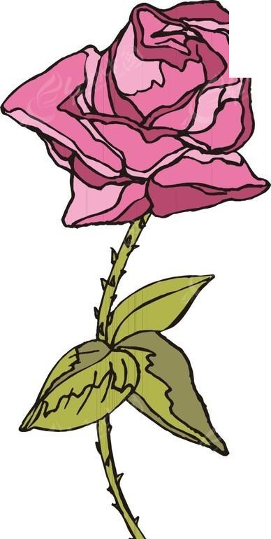 一朵粉色手绘月季花