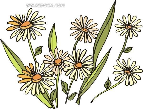 白色手绘非洲菊和绿叶