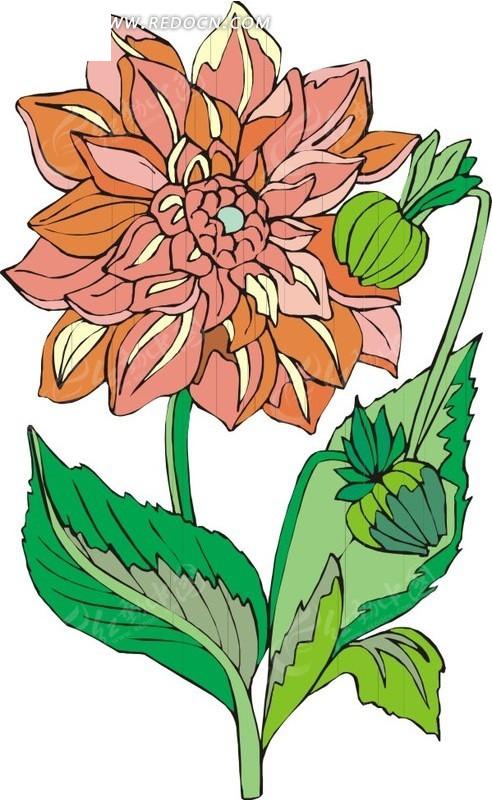 橙色手绘花朵和花苞矢量图_花草树木