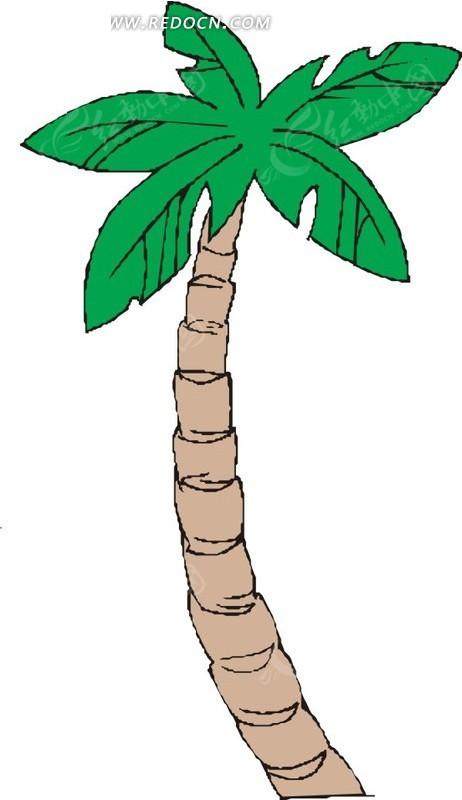 手绘褐色树干的椰子树矢量图
