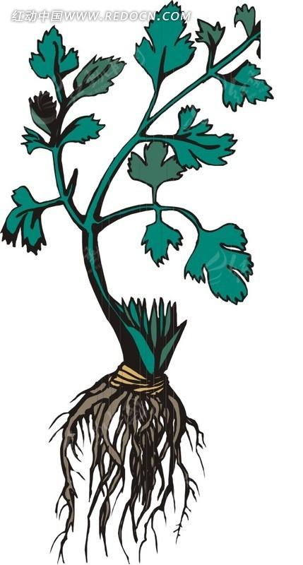 手绘青色叶茎和青色叶子的植物